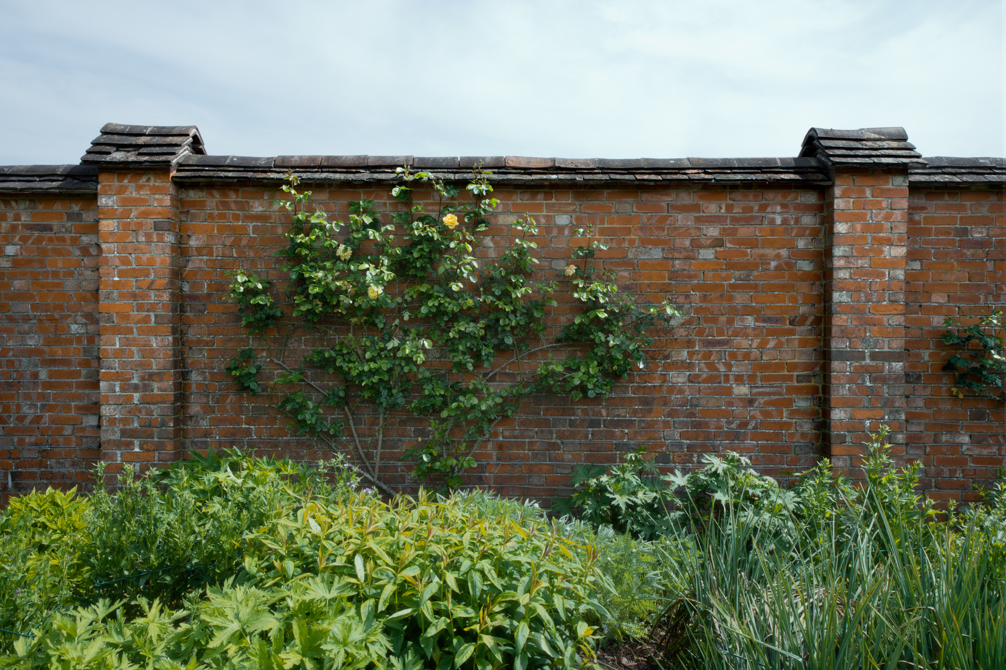 garden wall at chartwell westerham 2014 by leslie hossack - Garden Wall